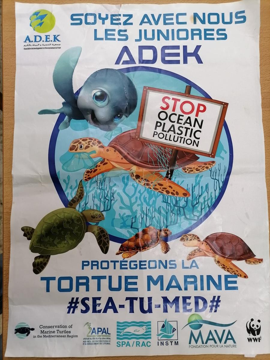 Bringing Marine Turtles to Schools