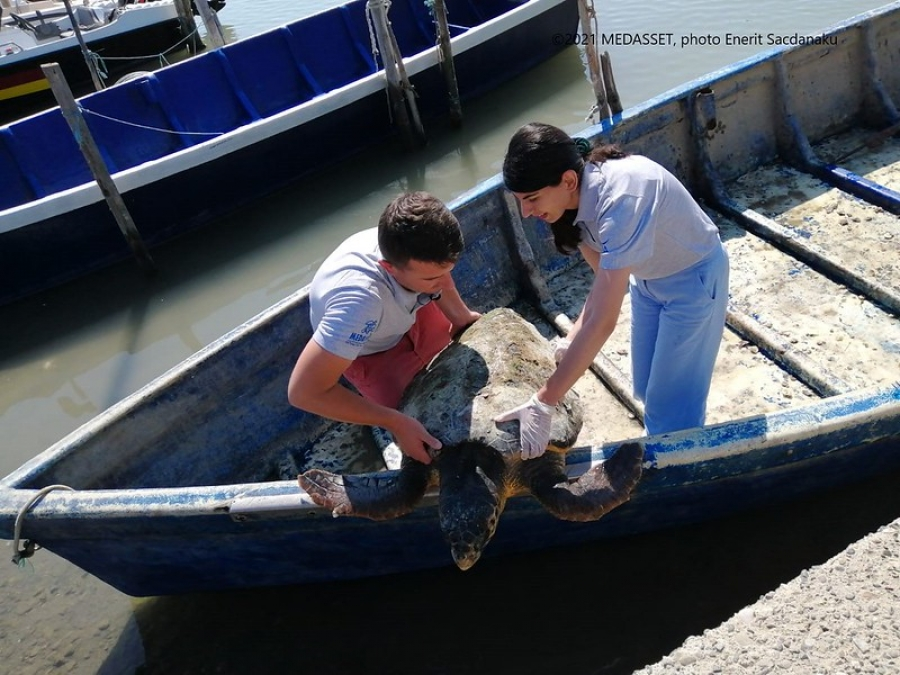 World Sea Turtle Day marks launch of field surveys...